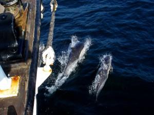 04 dauphins