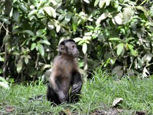 34 macaque